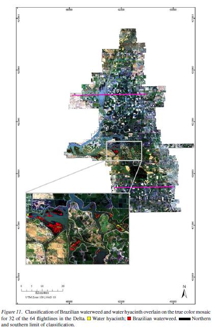 species classification delta project